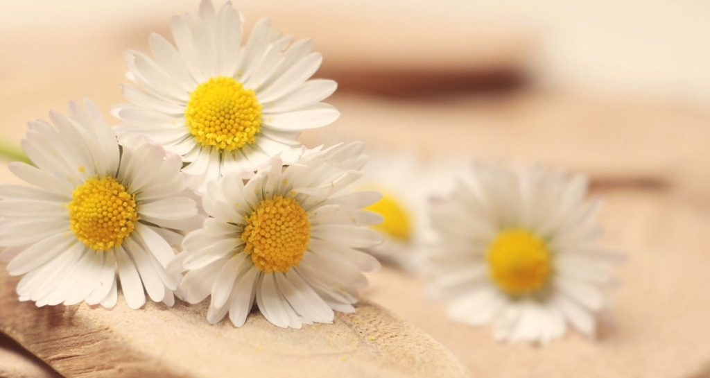 Chamomile for hair