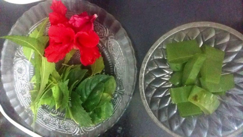 Hibiscus with Aloe Vera