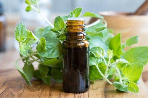 oregano oil for hair